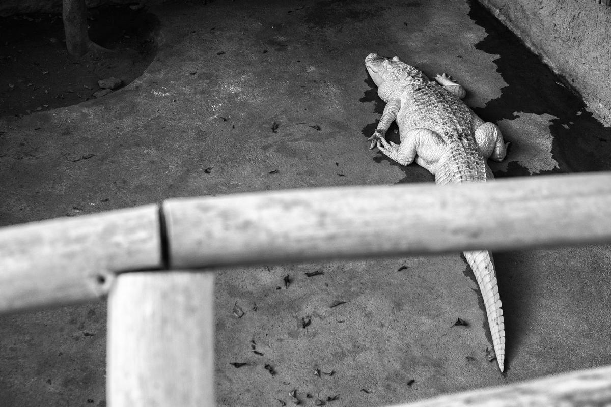 albinismoweb.jpg