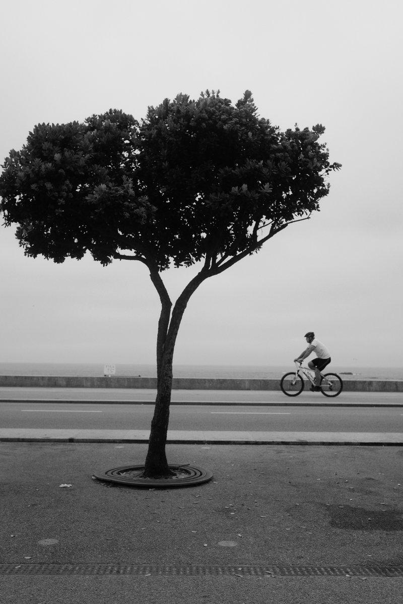 BikerTreeFuji.jpg