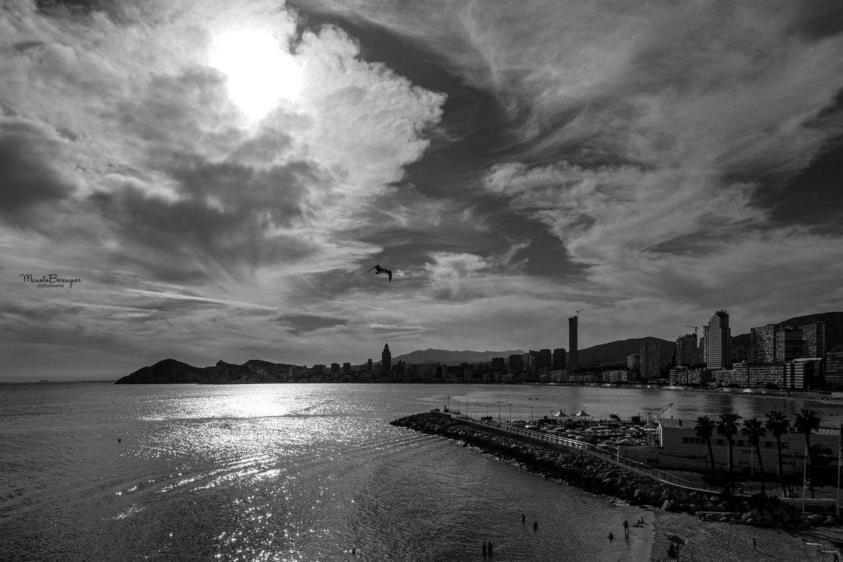 De cuando la gaviota vuela sobre el puerto de Benidorm.jpg