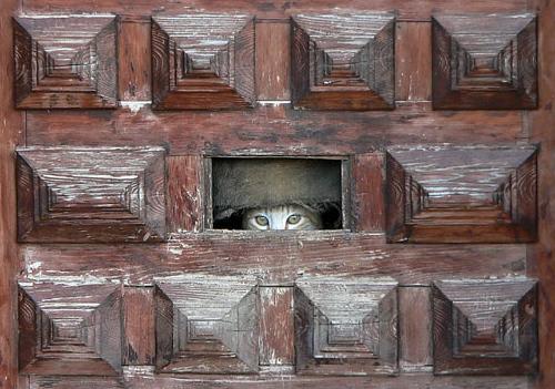 Gossip cat.jpg