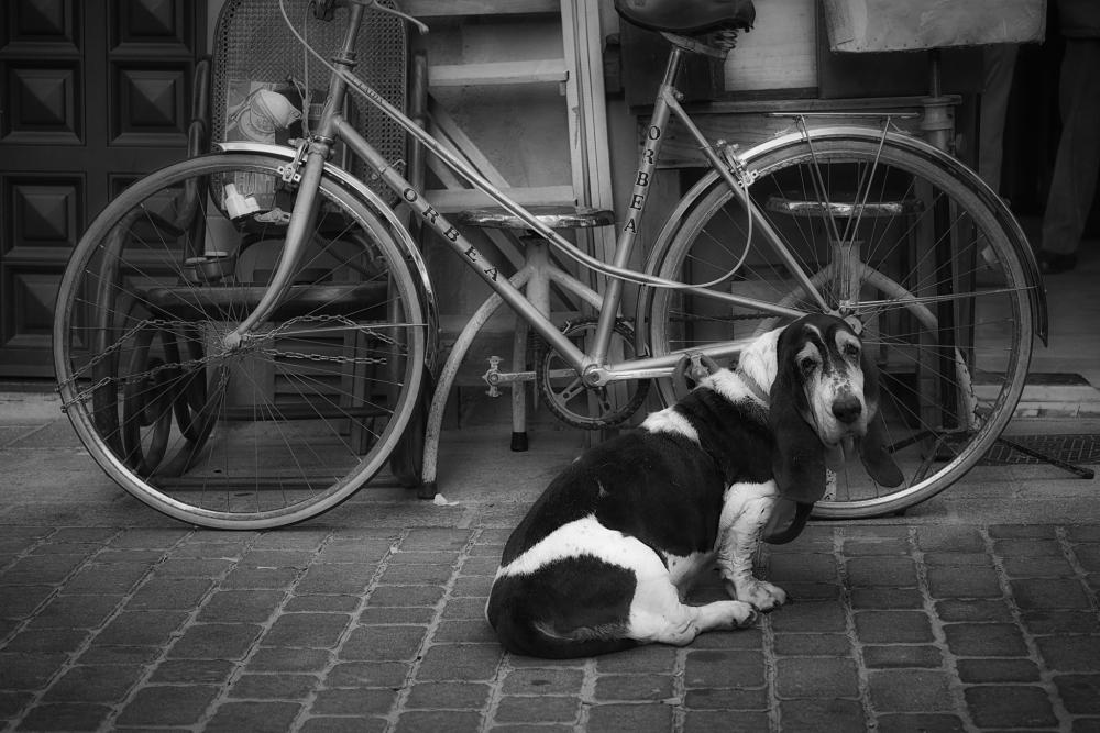 guarda bicis_opt.jpg