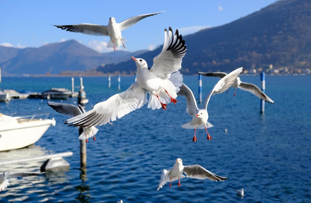 lago Iseo Sarnico italia.JPG