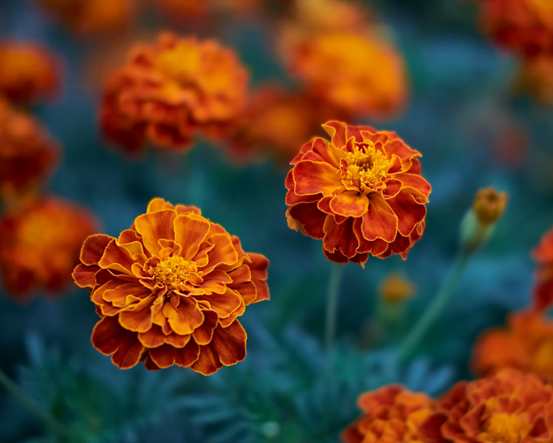 Orange color.jpg